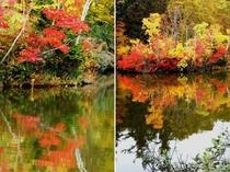 八幡平大沼の湖面に映える紅葉