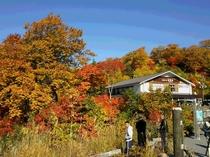 紅葉の大沼茶屋湖