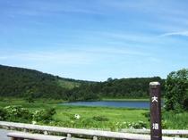 新緑の頃の八幡平大沼