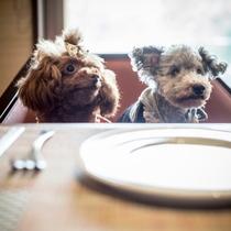 愛犬とお食事2