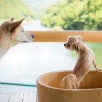 愛犬も温泉を楽しめる1