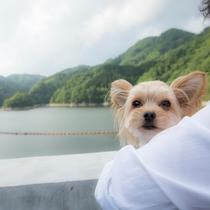 湯原湖と愛犬1