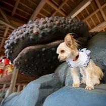 湯原温泉の天然記念物「はんざき」2