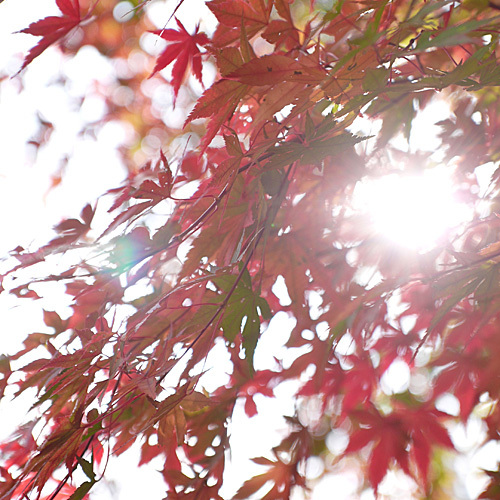 露天風呂からの那須高原の四季