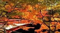 *[周辺観光]中野もみじ山。紅葉シーズンにはライトアップも楽しめます。