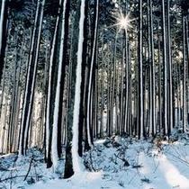 静かな冬の一日が皆様を包み込みます。