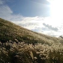 仙石原すすき草原(10月下旬~11月)