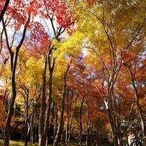~秋~箱根美術館庭園の紅葉(当館からお車で約16分)
