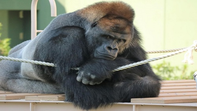 名古屋観光【東山動植物園入園券付きプラン】ファミリーやカップルにオススメ☆朝食付