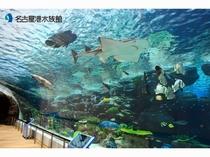 名古屋港水族館 サンゴ