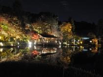 東山動植物園 紅葉夜景