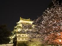 名古屋城 夜景