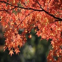 上尾公園の紅葉