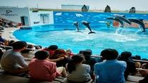 ◆≪仙台うみの杜水族館≫東北最大級のパフォーマンスをご覧くださいませ♪