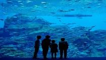 ◆≪仙台うみの杜水族館≫大水槽では世界中の個性的な生き物がご覧頂けます♪