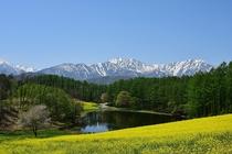 中山高原の菜の花畑