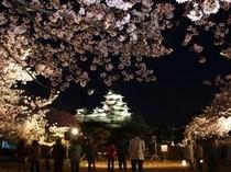 姫路城、夜桜