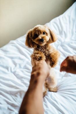 基本プラン【愛犬と一緒に金沢観光】【静かな川沿い】素泊まりプラン
