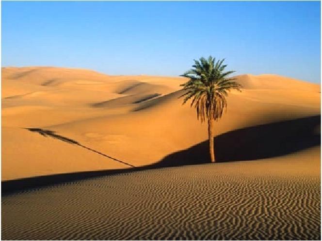 カラハリ砂漠・イメージ