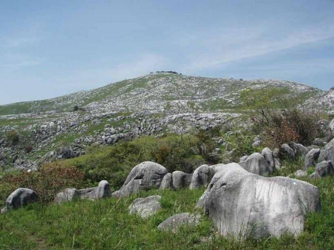 平尾台(日本三大カルストのひとつ)石灰岩地帯が広がる。