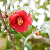 *【施設一例】お庭に咲く椿の花。お庭では四季折々の姿をご覧頂けます。