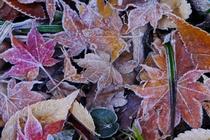 秋のアルバム