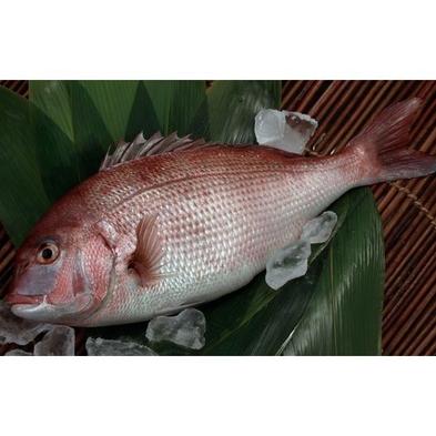 【セルフde鯛・ブリ合い盛りしゃぶしゃぶ鍋】お魚好きにはたまらない!温泉は貸切風呂で