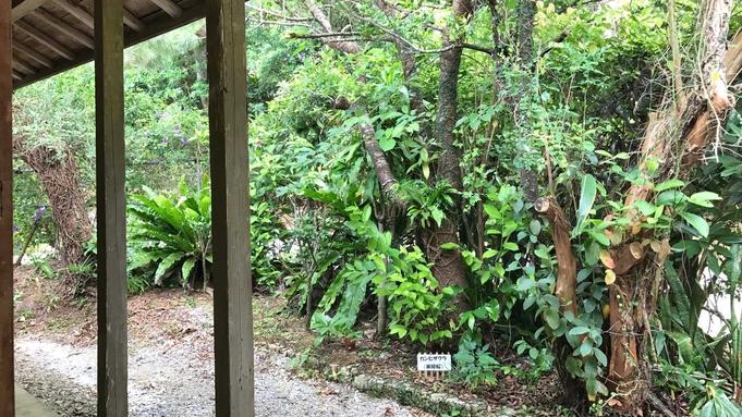 【1日1組限定】羽地の自然に囲まれた古民家でのんびりステイプラン(素泊り)