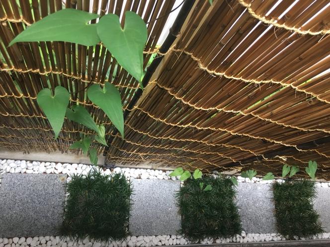 狭い空間さえも活用できる日本の坪庭