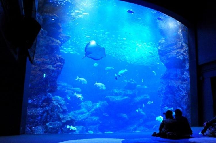 クリスマスプランの京都水族館
