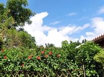 【外観】南国らしい大きくて美しいハイビスカスも咲いています
