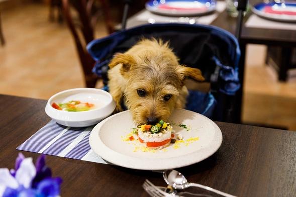 【スタンダードプラン】 愛犬の喜ぶ天然芝のドッグラン併設/豪華フレンチフルコース(1泊2食)