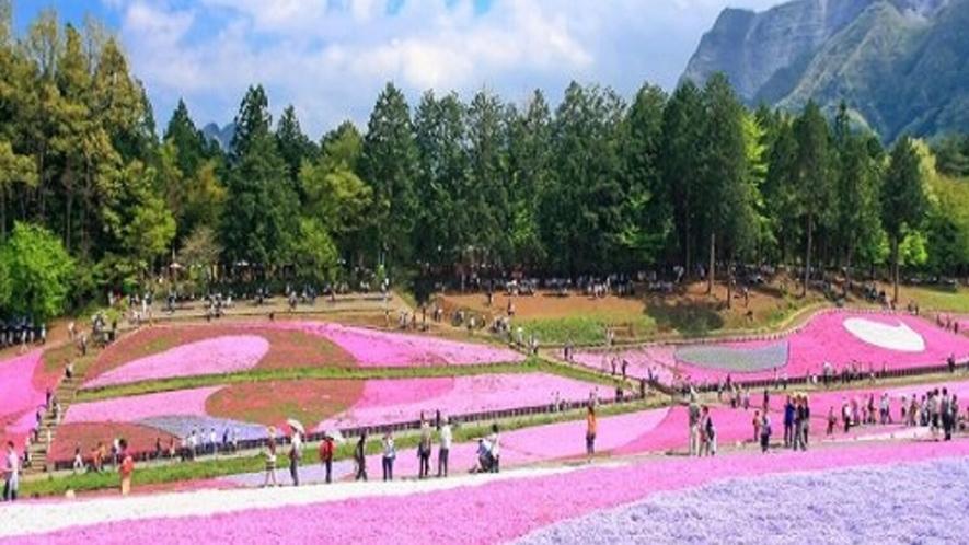 【観光情報】芝桜の丘(羊山公園)