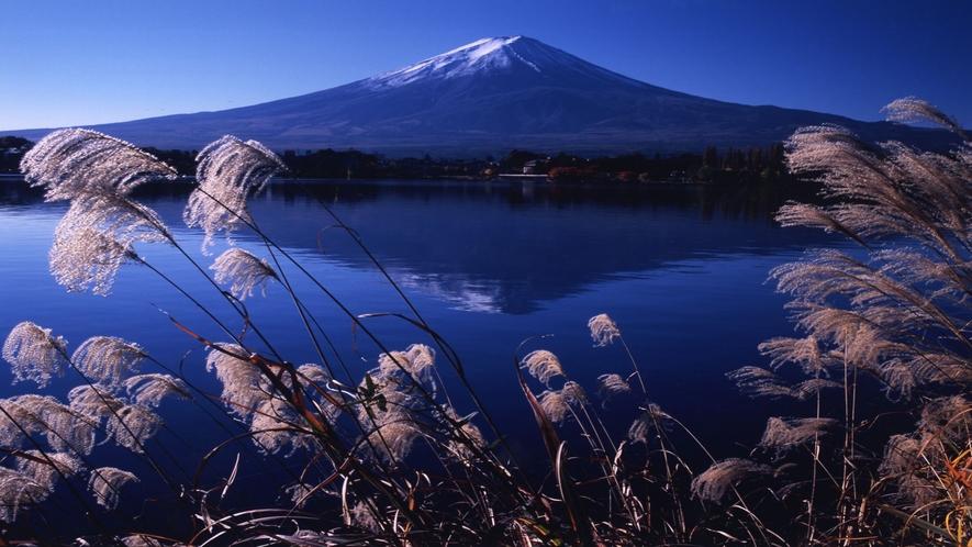 ■富士山と河口湖とすすき<秋>(写真提供:富士河口湖 観光課)