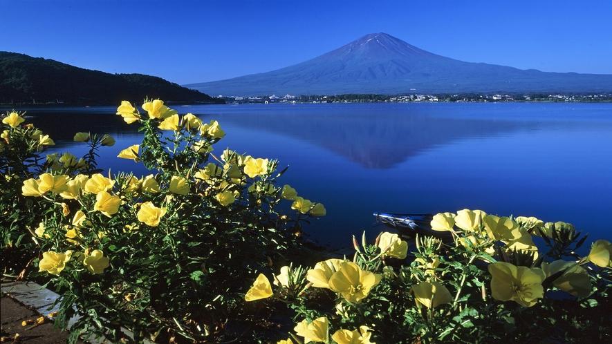 ■富士山と月見草<秋>(写真提供:富士河口湖 観光課)