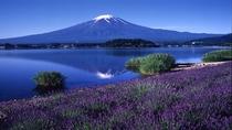 ■富士山と河口湖とラベンダー<夏>(写真提供:富士河口湖 観光課)