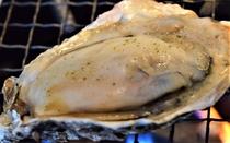 プリッとした広島産の牡蠣を一年中お楽しみいただけます。