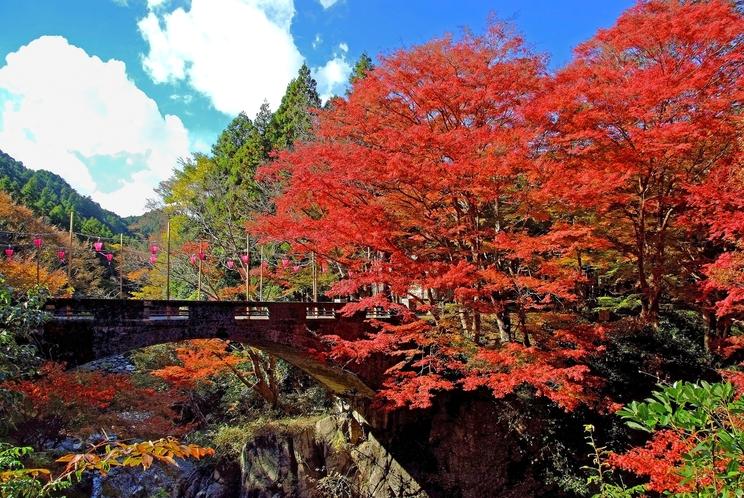 河内渓谷 紅葉