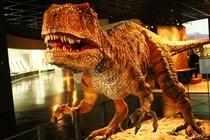 【福井恐竜博物館】恐竜化石の一大産地である福井県、大人から子供まで楽しめます。