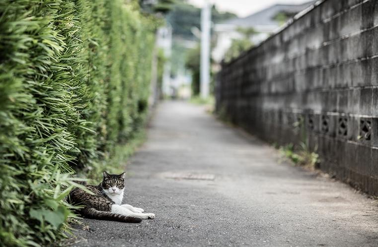 路地裏散策