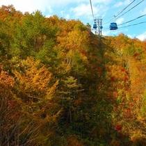 ロープウェーから広大な秋の色付きを楽しむ
