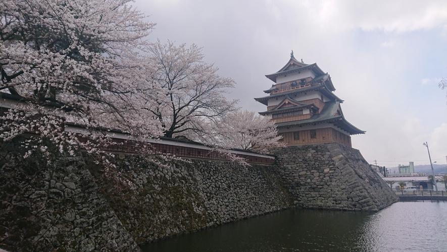 高島城 桜