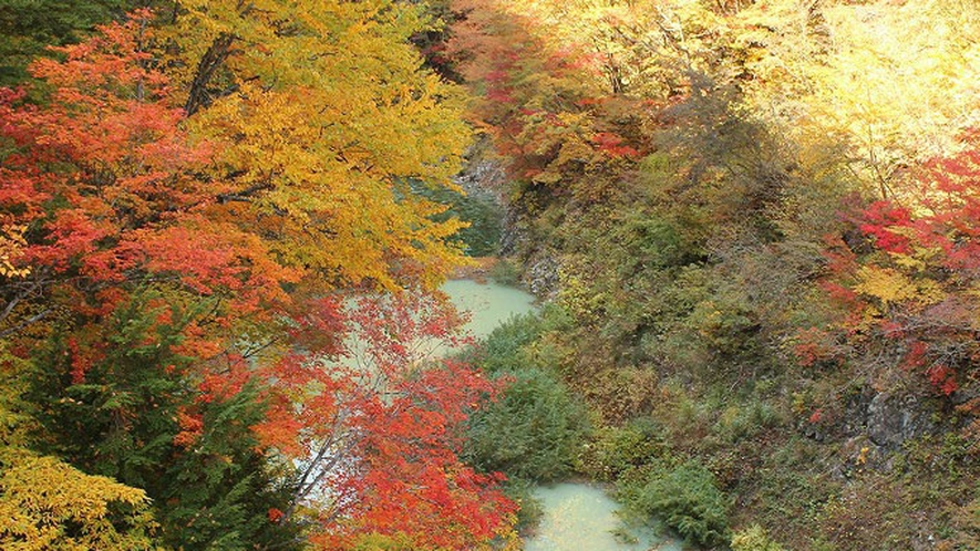 *【周辺観光】秋景色では見事な紅葉がご覧いただけます