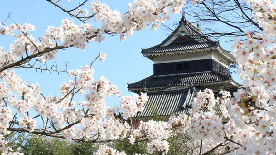 *【周辺観光】松本城の春景色。桜が大変きれいです