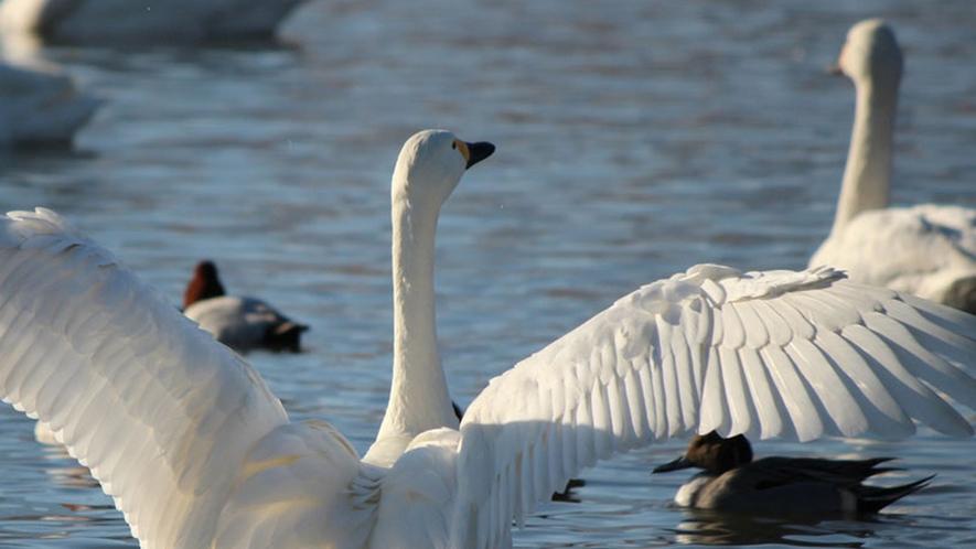 *【周辺観光】御宝田遊水池の冬景色にほっこりした景色が見られます