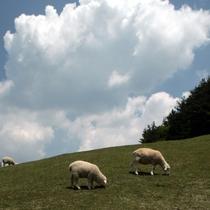 【六甲山】*神戸市立六甲山牧場*