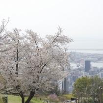 【神戸布引ハーブ園】*桜*