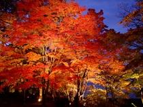 山中湖・紅葉祭り