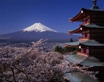 新倉浅間神社と桜(春)当館から車で10分