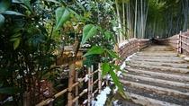 冬の京竹林